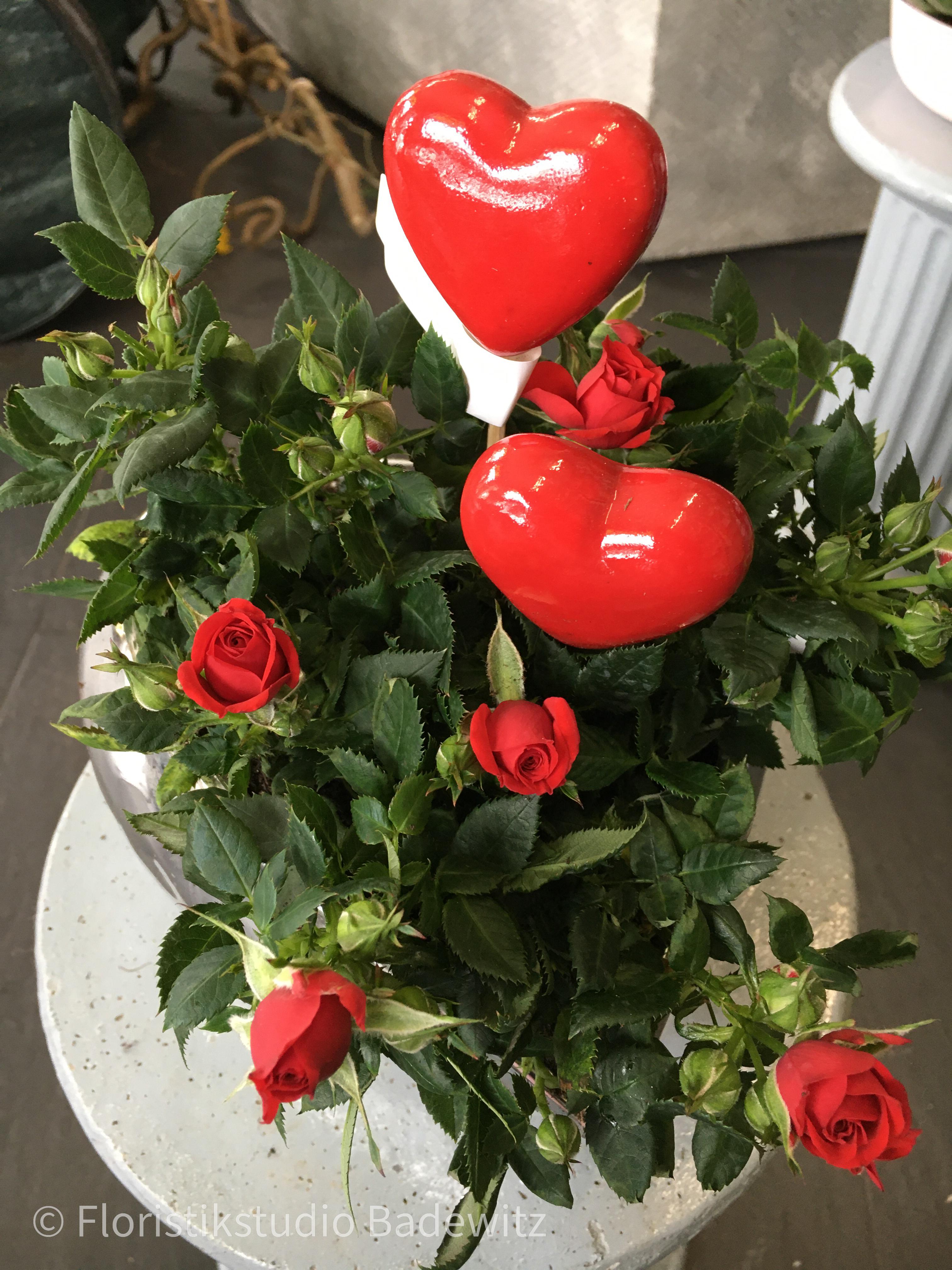 Silberherz mit Rosenpflanzen